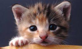 Avviate le indagini sui killer dei gatti