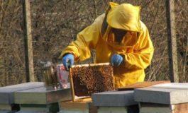 Perché a Volpedo le api muoiono?