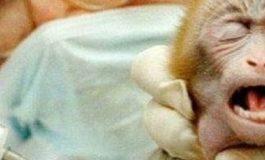 Ancora torture sugli animali: i partiti e i nomi di chi ha votato la proroga di tre anni per gli esperimenti