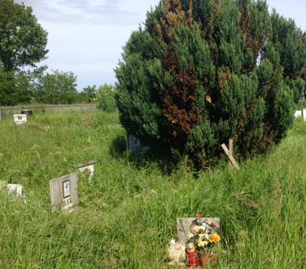 Il cimitero degli animali è abbandonato a se stesso