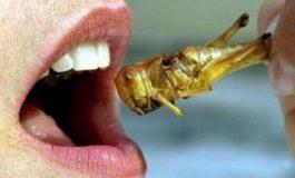 Vermi, larve, insetti: nemmeno la mondializzazione è un pranzo di gala!