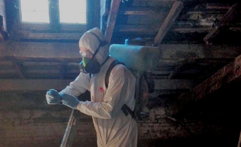 Tolte ben 14 tonnellate di guano e di piccioni morti nel sottotetto della Scuola Saracco di Acqui