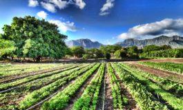 Nuove opportunità in agricoltura grazie alla Città del Bio