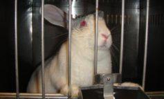 Il Parlamento Ue chiede il veto sui test animali per i cosmetici