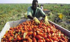Imprenditori agricoli denunciano per diffamazione i due sindacalisti che hanno difeso i braccianti di colore