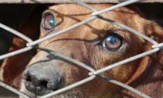 Cani tenuti nella sporcizia senza acqua e cibo: denunciato il proprietario