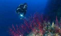 Riceviamo e pubblichiamo: il diving che accompagnava i sub di Alessandria non era di Camogli