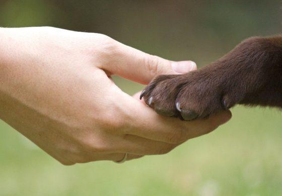 Agire ora per salvare gli animali che noi mangiamo