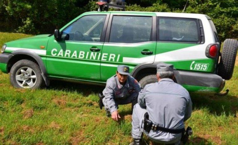 Arrestato il piromane responsabile di 23 roghi nei boschi della bassa alessandrina