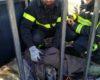 Femmina di capriolo incastrata tra le sbarre di un cancello tratta in salvo dai Vigili del Fuoco