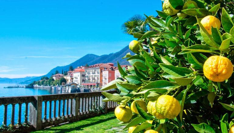 """Arance, limoni e cedri: non è la Sicilia ma una fetta di Piemonte sul Lago Maggiore, dov'è nato il """"Cannero's Orange"""""""