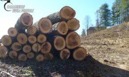 Trasforma abusivamente un bosco in un noccioleto: nei guai un agricoltore