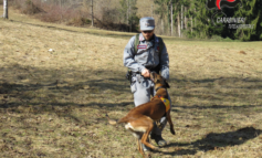 """Il cane antiveleno Kira in azione a San Damiano d'Asti per scongiurare il pericolo dei """"bocconi"""""""