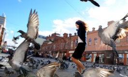 Uccisi settecento piccioni dal Comune di Ferrara