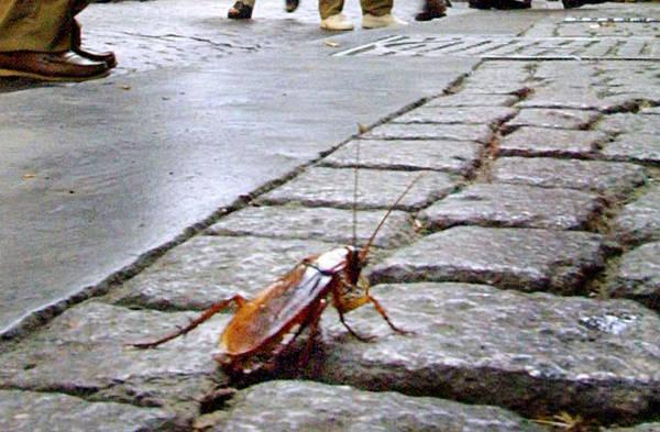 Migliaia di scarafaggi hanno invaso il centro di Alessandria nella notte tra domenica e lunedì