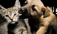 Non puoi più occuparti del tuo cane o del tuo gatto? Nessun problema, c'è l'assistente sociale