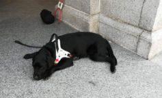 Donna ipovedente invitata a lasciare la messa a causa del suo cane guida