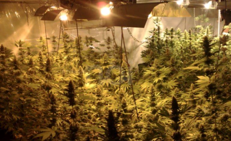 Per alimentare la serra di marjuana ruba l'elettricità ai vicini di casa: denunciato