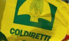 Da Coldiretti Alessandria