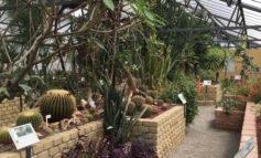Al Giardino Botanico di Alessandria tre piante dedicate ai tre Vigili del Fuoco scomparsi a Quargnento