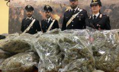 Grazie ai pastori tedeschi Fox e Orso Grigio i Carabinieri di Alessandria scoprono in un garage dieci chili di marijuana: in manette pregiudicato quarantenne