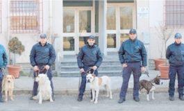 DAL CANILE AL SERVIZIO ANTIDROGA: LA POLIZIA ADDESTRA RANDAGI CON OTTIMI RISULTATI E GRANDE RISPARMIO
