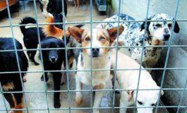 """A Palermo è stata bloccata la """"deportazione dei cani"""""""