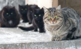 Gattara metteva file di mattoni lungo la strada per rallentare il traffico e proteggere i suoi amici gatti
