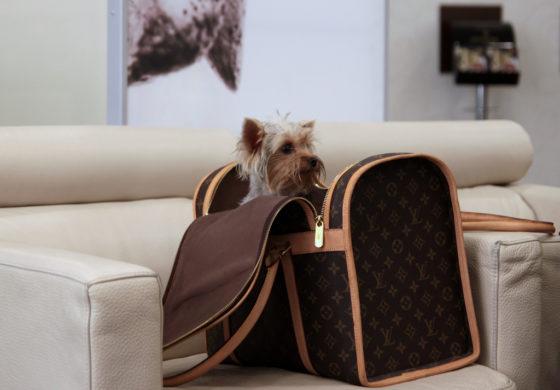 Animali domestici: come organizzare un viaggio in aereo?