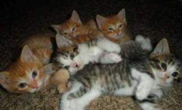 Torturava gli animali anziché curarli: condannato veterinario killer