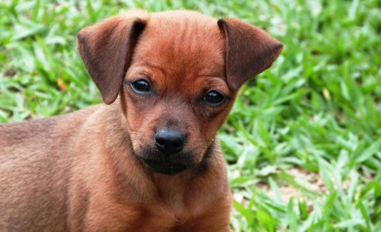 È vero che un anno del cane equivale a sette anni dell'uomo?