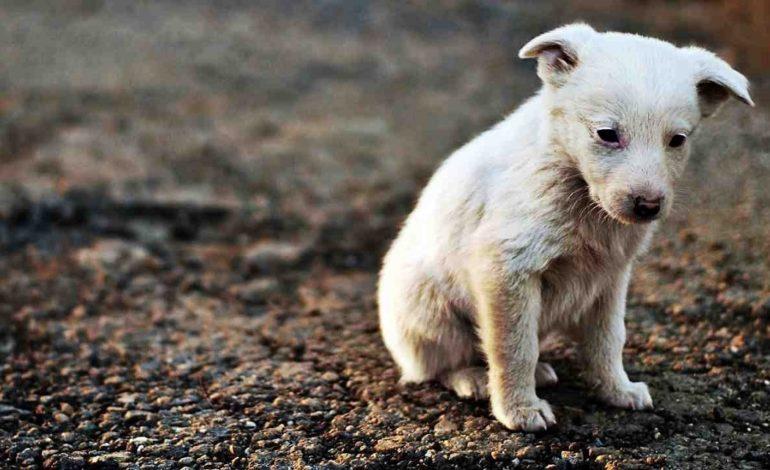 Se si adotta un cane il Comune riduce le tasse