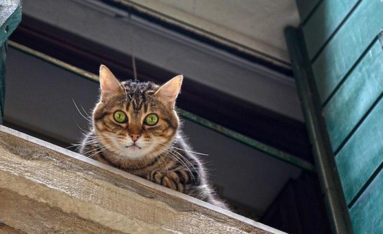 Colto da malore è salvato dal gatto