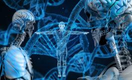 Le bimbe cinesi geneticamente modificate potrebbero avere un cervello superiore