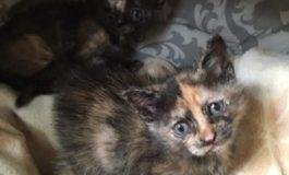 Gattine trovate in un sacchetto di rifiuti a Moncalvo: stanno bene e ora hanno bisogno di una casa