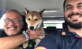 Polstrada di Ovada salva LouLou, cane abbandonato sulla A26