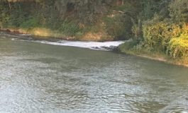 Ancora schiuma nelle acque del Tanaro dal depuratore degli Orti: per Amag è colpa delle copiose piogge di novembre