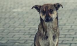 Cosa fare se si trova un cane abbandonato