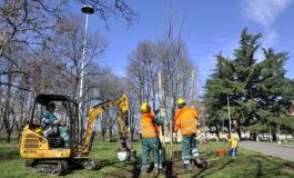Quindici nuovi pioppi al Parco Galli