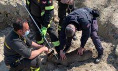 Tre caprioli in città: intervengono anche i pompieri