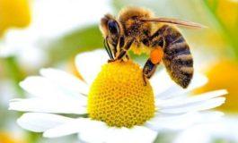 Da Regione Piemonte: tutela delle api