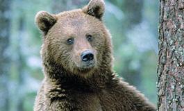 """Da Leal Lega Antivivisezionista: l'orso M49 """"in prigione"""" al Casteller, denunciata la Provincia Autonoma di Trento"""