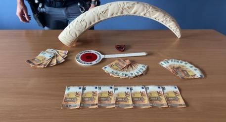 Banconote false in auto e una zanna d'elefante in casa: arrestato
