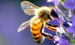 Da Confagricoltura Alessandria: giornata mondiale delle api