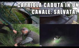 Da Rifugio Miletta di Agrate Conturbia: spettacolare soccorso di una capriola gravida caduta in un canale a Galliate (Video)