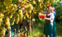 Da Regione Piemonte: le misure a sostegno dell'agricoltura