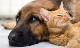 Dal Partito Animalista: carcere per chi maltratta e uccide gli animali
