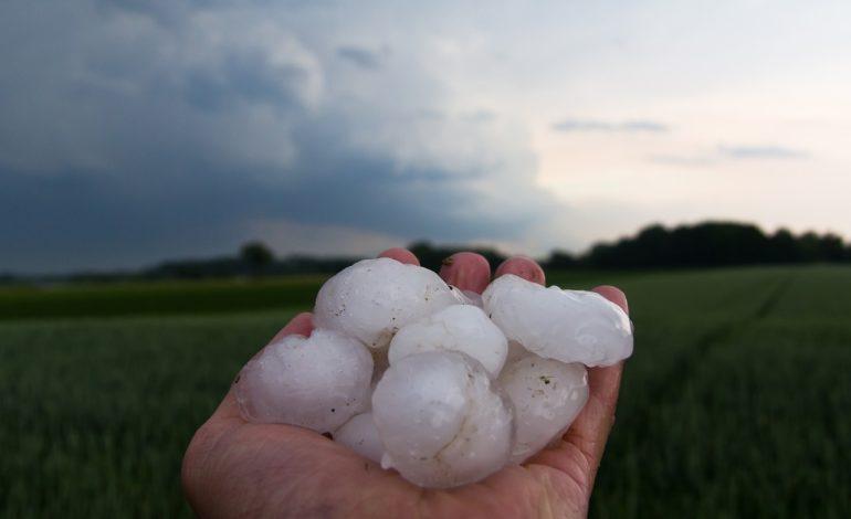 Maltempo in Piemonte: gravi danni a serre, stalle e coltivazioni