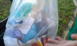 Venaria, gettava le siringhe usate nei cestini: denunciato veterinario