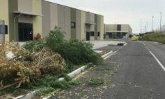 Colpo da 25.000 euro al negozio Terranova ad Alessandria: i banditi hanno bloccato la strada e smurato la cassaforte